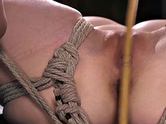 Hogtied sub gets cane into her pussy